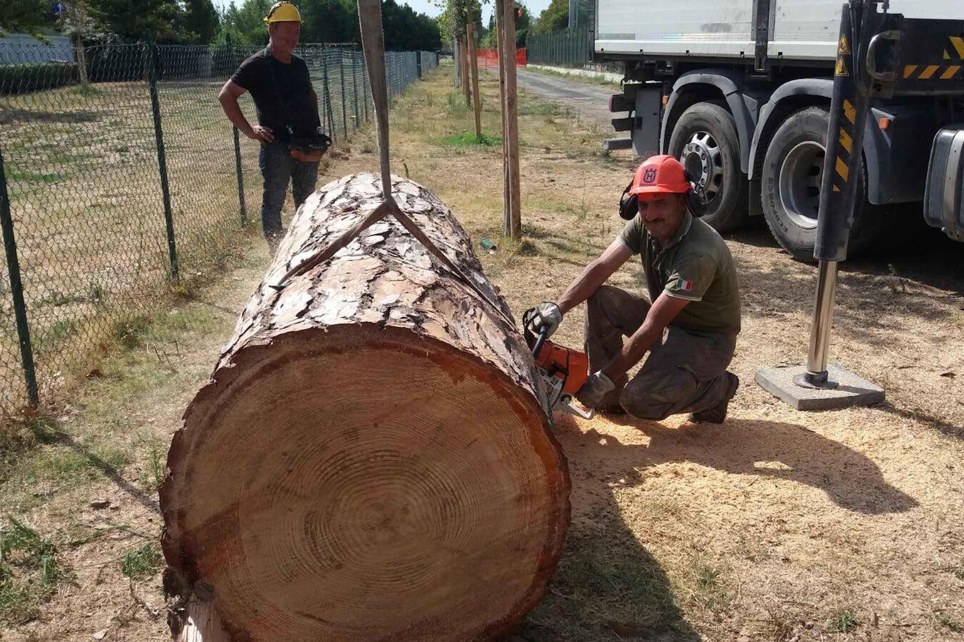 manutenzione-alberi
